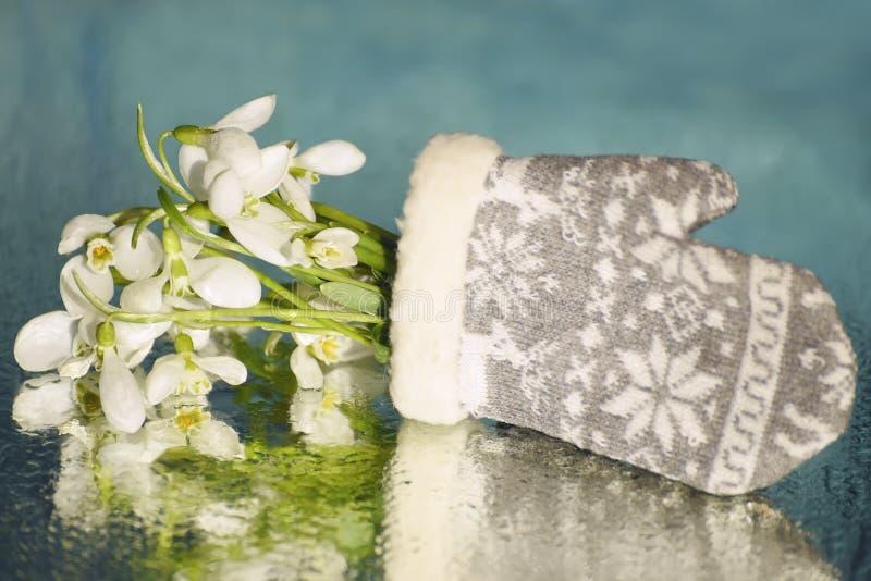 Первые цветки весны первоцветов snowdrops стоковая фотография