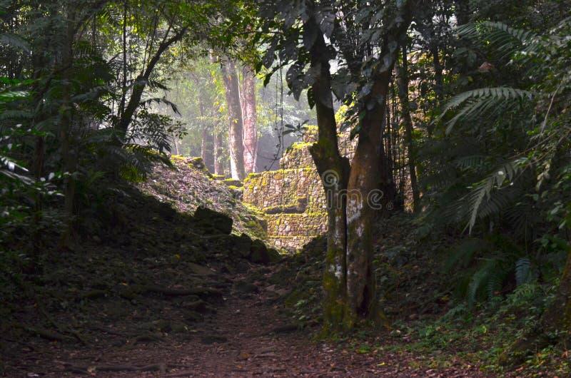 Первый взгляд руин на Yaxchilan, Чьяпасе, Мексике стоковая фотография