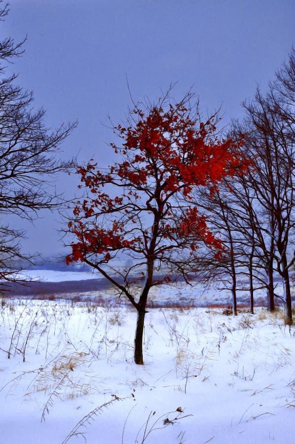 Первый день зимы покрытые Снег деревья в холмах снега f стоковое фото