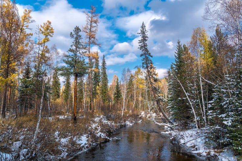 Первый снег в сибирском taiga стоковые фотографии rf