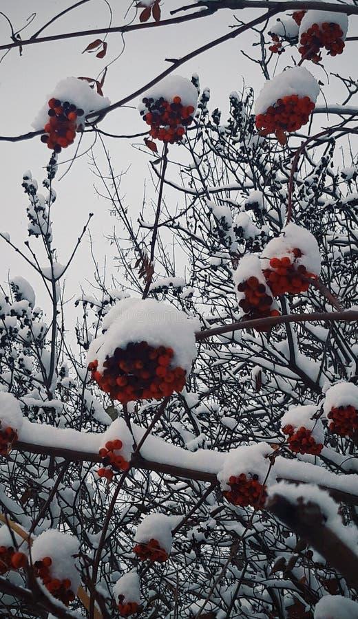 Первый снег в Украине стоковые изображения rf