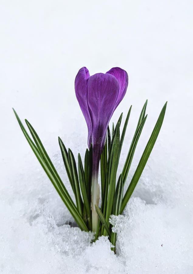 первый цветок стоковое фото