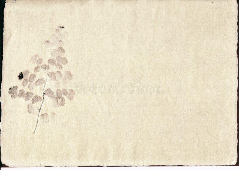 пергамент включения стоковое фото rf