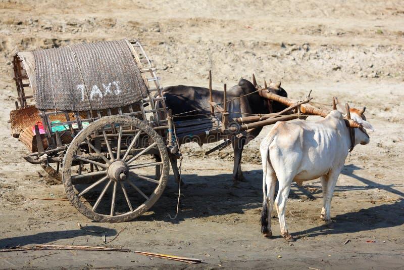 перевозка таксомотора вола myanmar тележки стоковая фотография