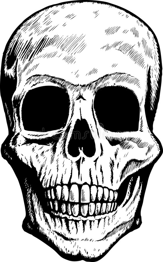 передний череп иллюстрация штока