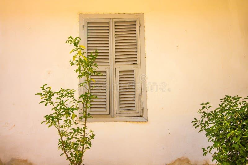 Перед стеной дома растет небольшой куст стоковые изображения