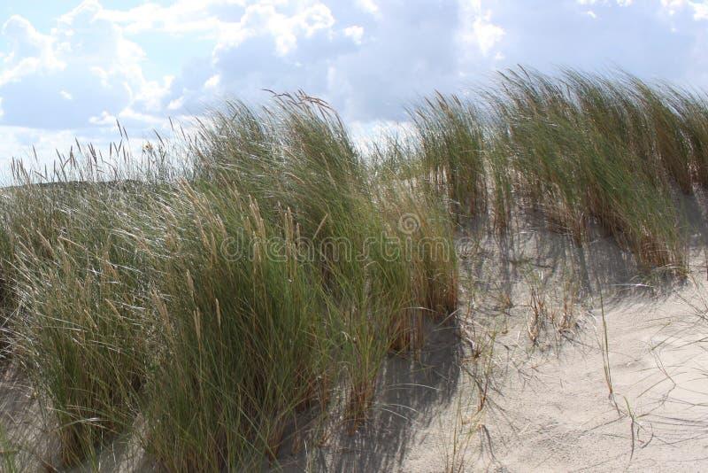 Перезвон ветра растительности на песчанной дюне на острове Spiekeroog под голубым облачным небом стоковая фотография rf