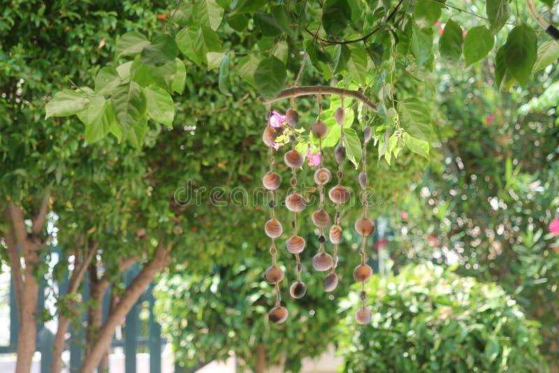 Перезвон ветра Seashell в саде стоковая фотография