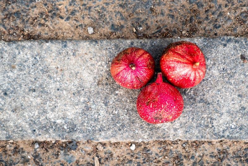 3 перезрелых красных плода смоквы группы лежа на стороне проселочной дороги стоковое фото