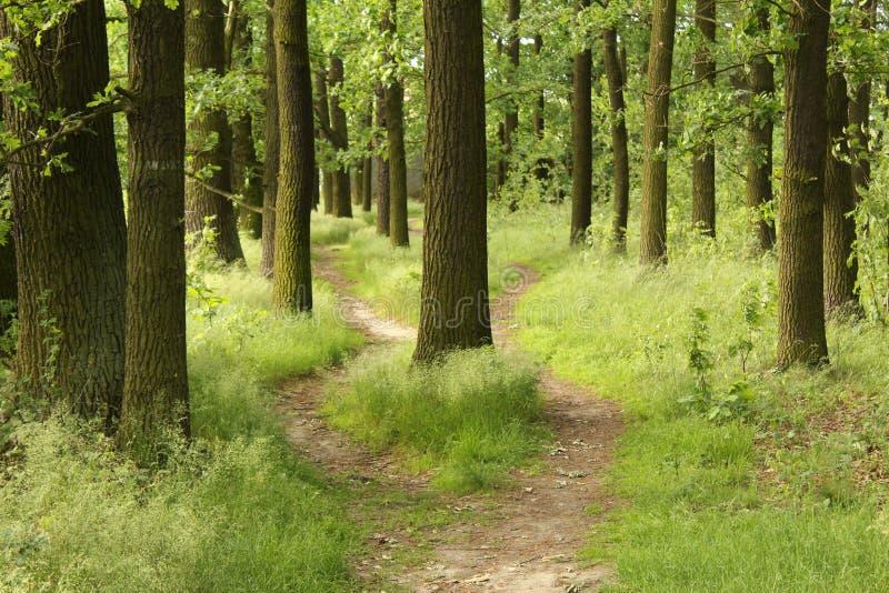 Перекрестки в лесе стоковые изображения rf