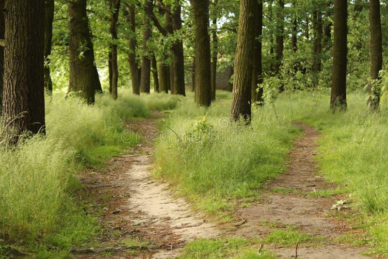 Перекрестки в лесе стоковые фотографии rf