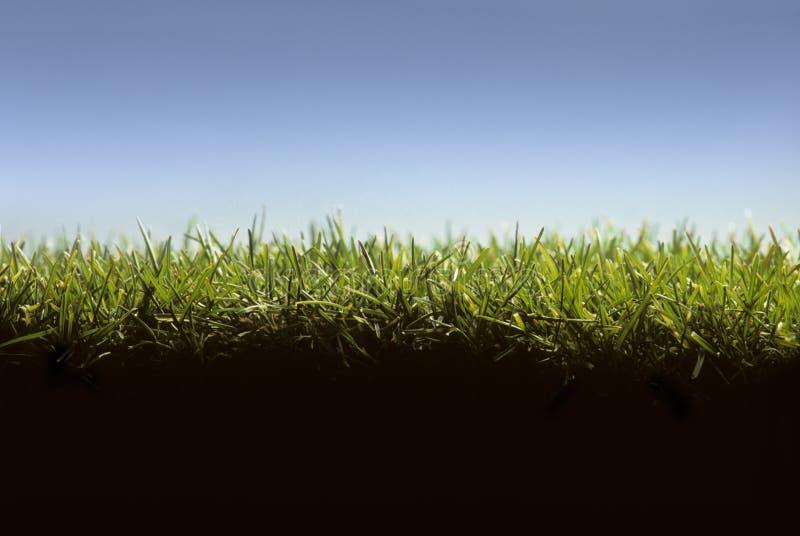 перекрестный раздел лужайки травы стоковые фотографии rf