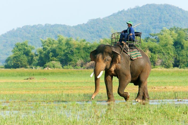 Перемещение Азии, летние каникулы, путешествие eco, слон стоковое фото rf