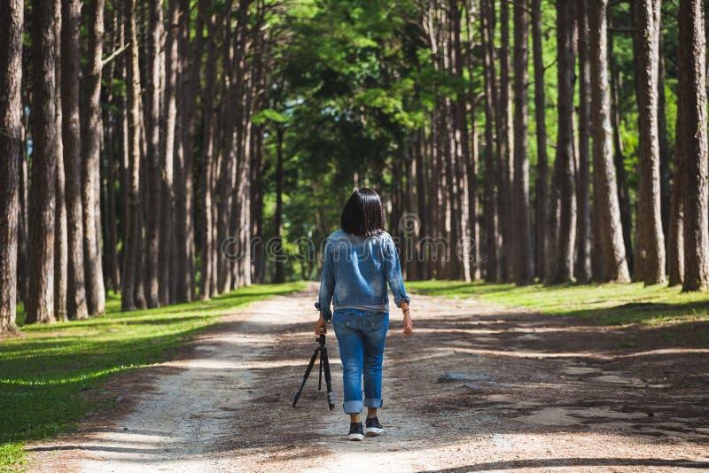 Перемещение женщины туристское в лесе стоковые изображения rf