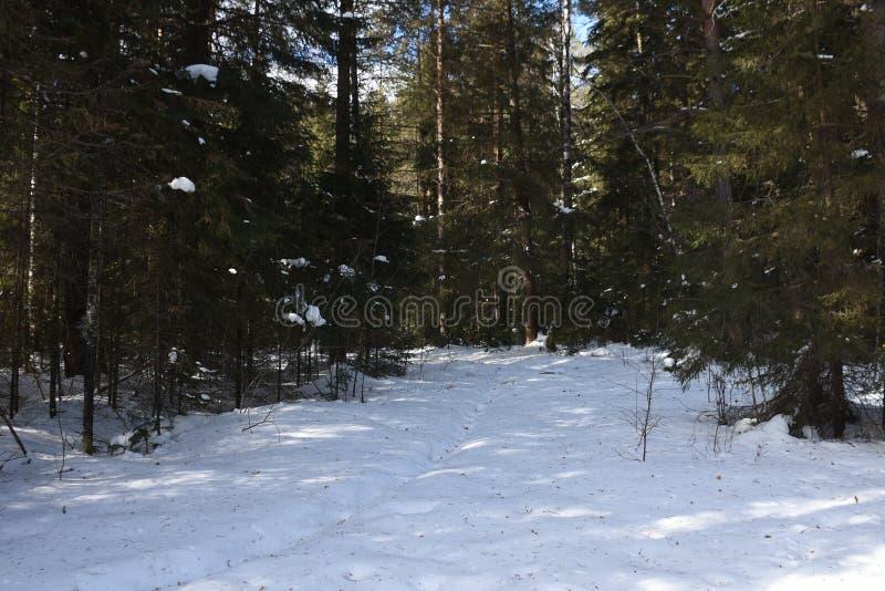 Перемещение к южному Уралу Национальный парк 2018 Taganay стоковое изображение rf