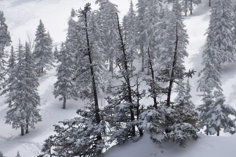 Перемещение к южному Уралу Национальный парк 2018 Taganay стоковое изображение