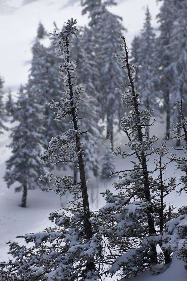 Перемещение к южному Уралу Национальный парк 2018 Taganay стоковое фото rf