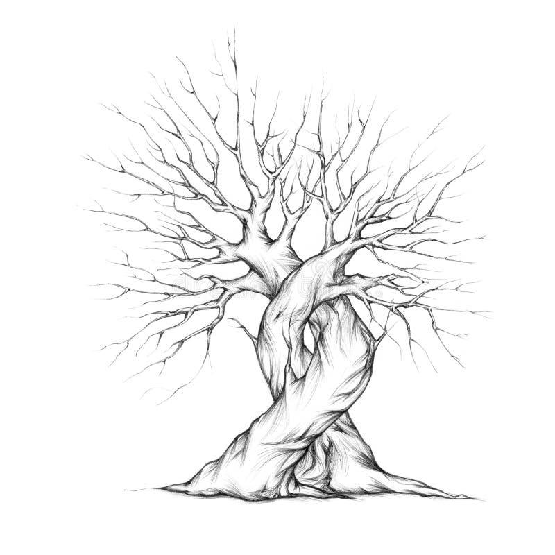 2 переплетаннсяых дерева иллюстрация вектора