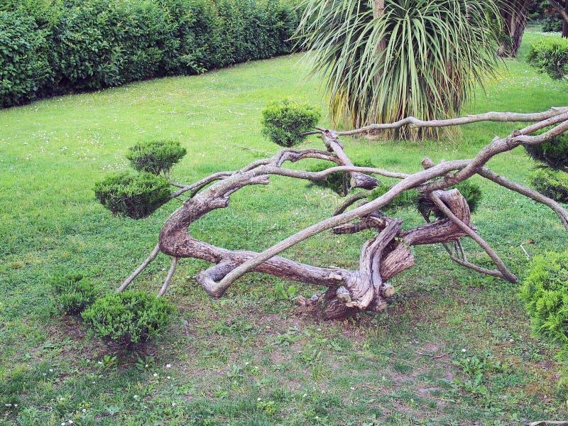 Переплетенный ствол дерева стоковые изображения rf