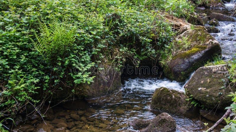 Перерастанные валуны на русле реки стоковые фото