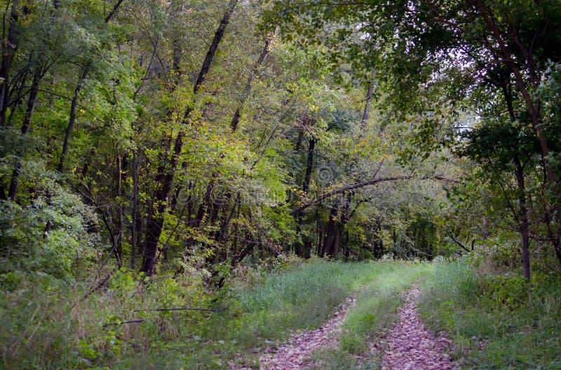 Перерастанный путь через древесины стоковая фотография rf