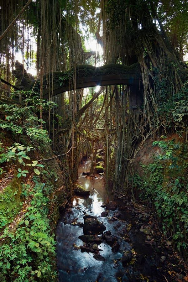 Перерастанный старый мост стоковые фото