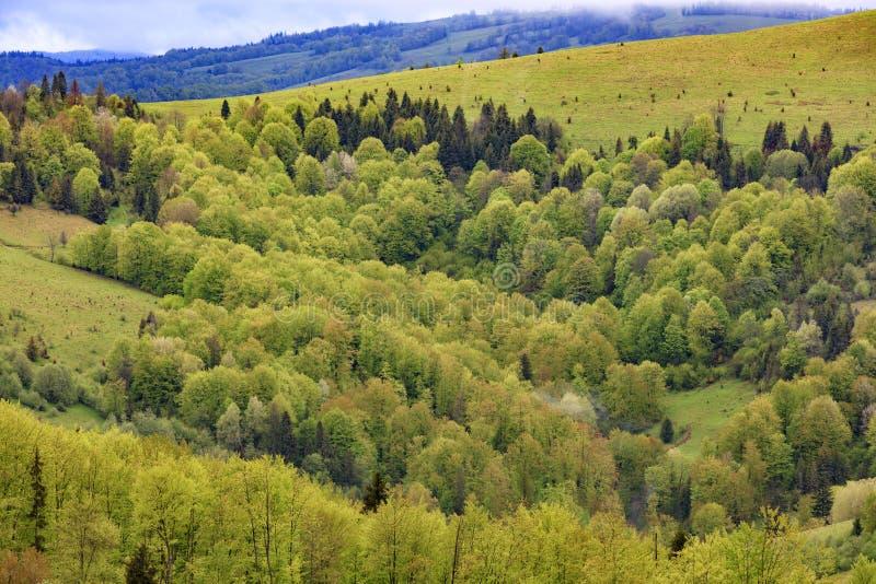 Перерастанный с молодыми лиственными деревьями, холмы прикарпатских гор, цветя весны Карпат от высоты стоковое фото