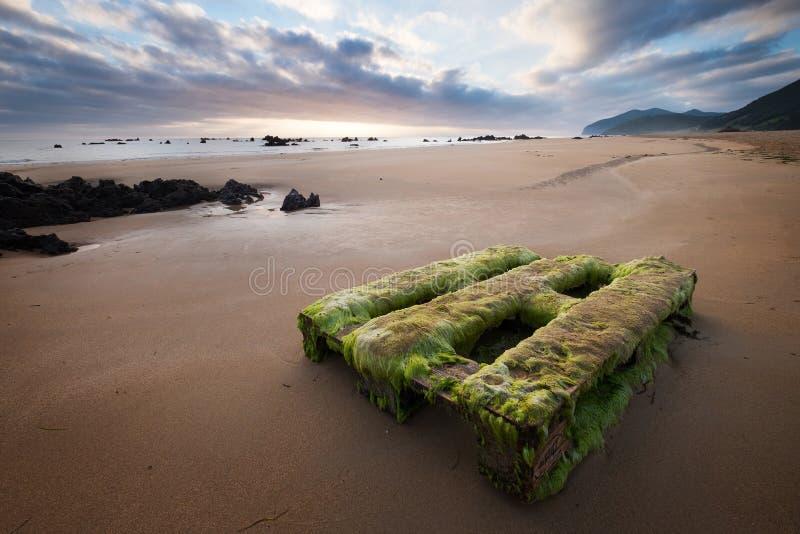 Перерастанный с паллетом водорослей деревянным на красивом пляже n песка стоковая фотография