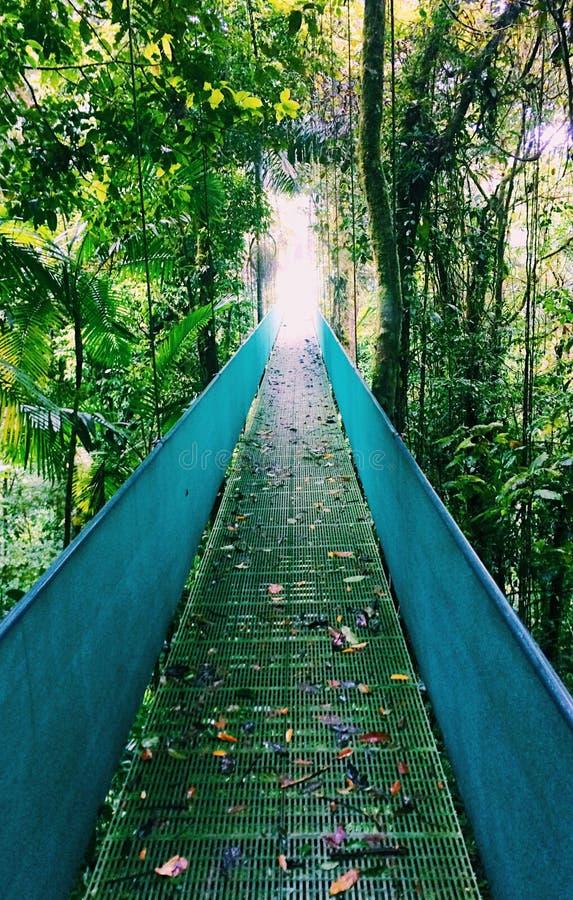 Пересекать мост в Коста-Рика стоковые изображения