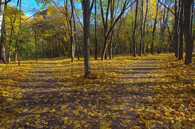 Пересекая пути в парке осени. стоковая фотография rf