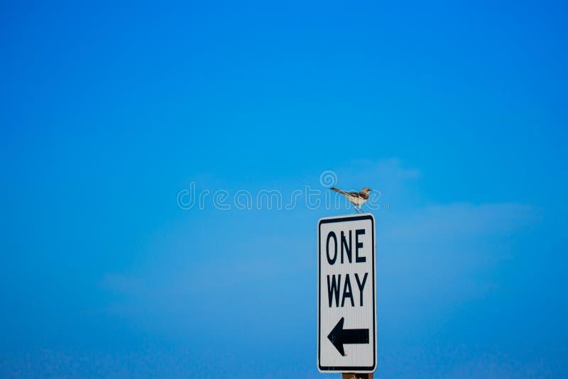 Пересмешник на одном знаке пути стоковая фотография