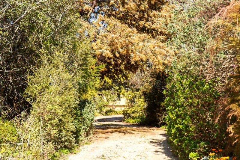 Переулок весны зеленый, чувствуя теплый стоковая фотография