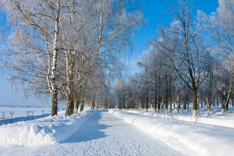 Переулок зимы стоковые изображения