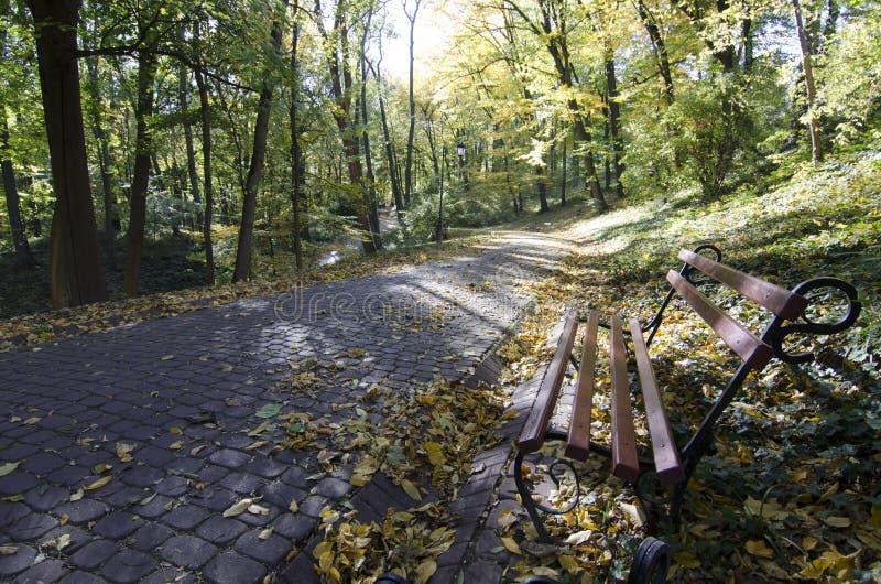 Переулок на осени Львове парка стоковое изображение rf