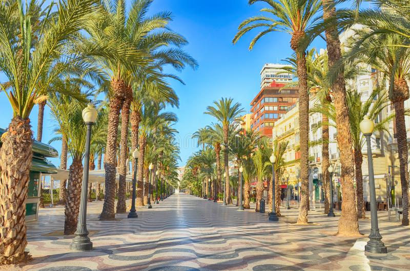 Переулок пальм Аликанте, Испании стоковые фото