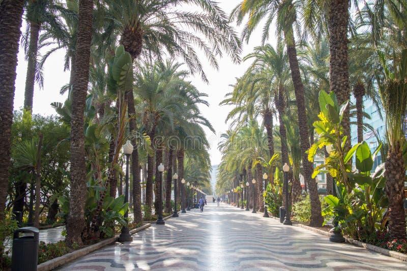 Переулок ладони на Аликанте стоковая фотография