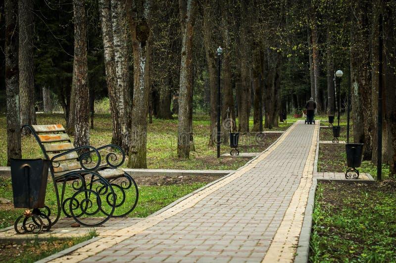 Переулок в русском парке в зоне Kaluga стоковое изображение rf