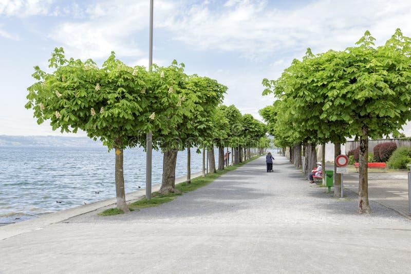 Переулок зеленых каштанов озером стоковое изображение rf