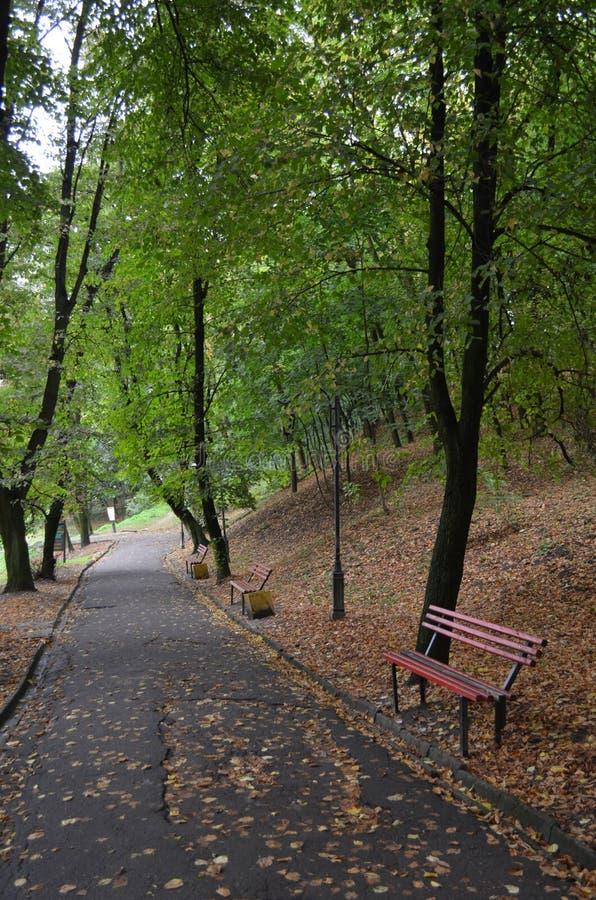 Переулок на парке стоковое изображение rf