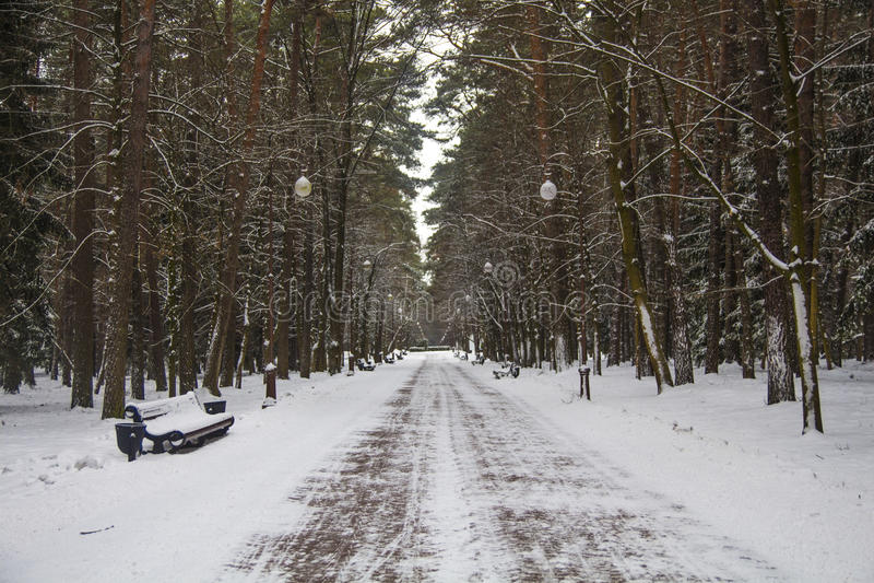 Переулок парка зимы стоковое изображение