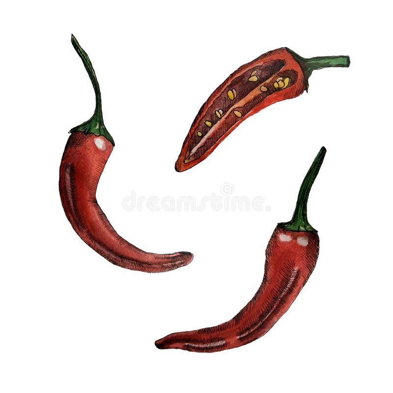 Перец горячего chili акварели бесплатная иллюстрация