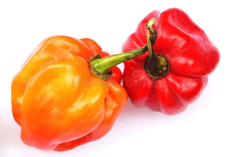 перец карибского habanero chili горячий изолированный стоковая фотография