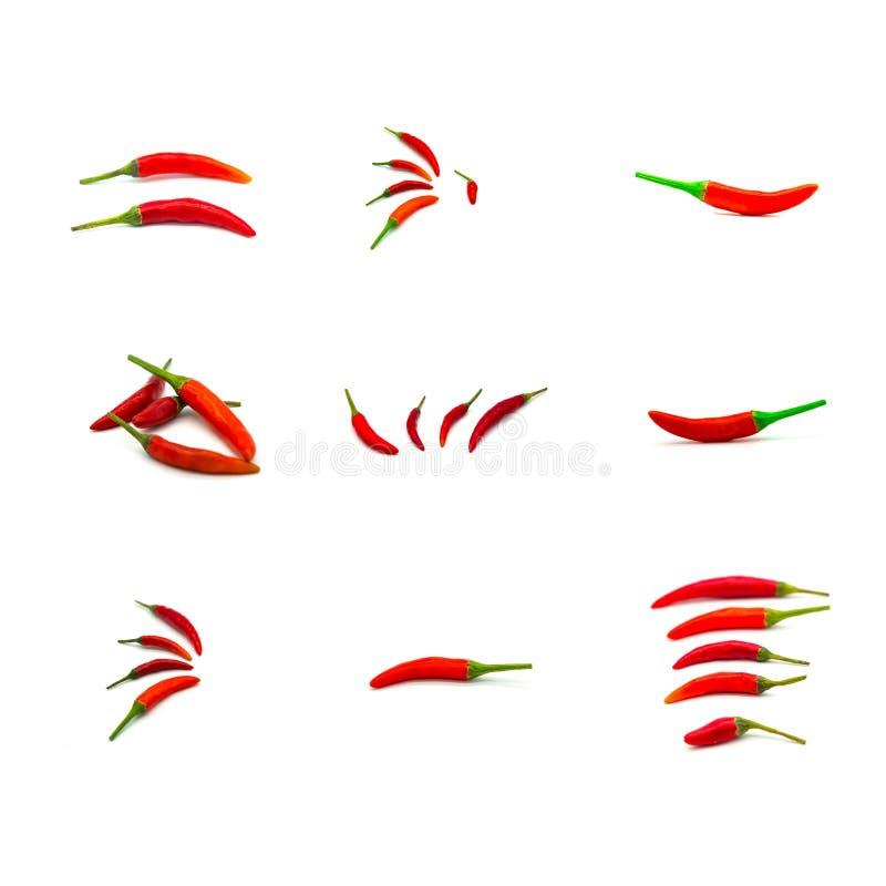 Перец красного chili изолированный на белой предпосылке closeup Собрание красного chili иллюстрация вектора