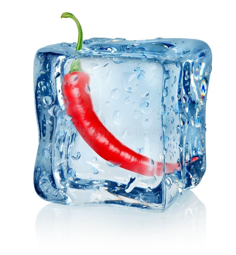 Перец Chili в кубе льда стоковая фотография rf