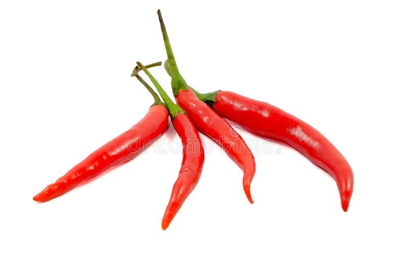Перец Chili изолированный на белизне стоковые фото