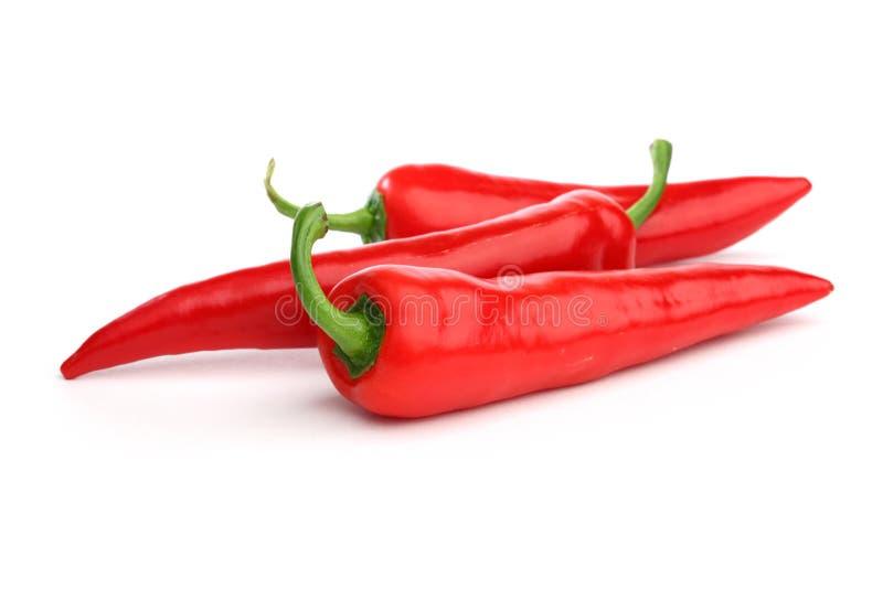 Перец Chili стоковое фото rf