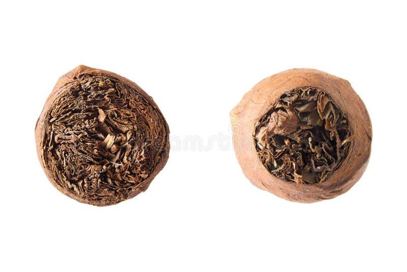 Передние и задние взгляды сигары стоковое фото rf