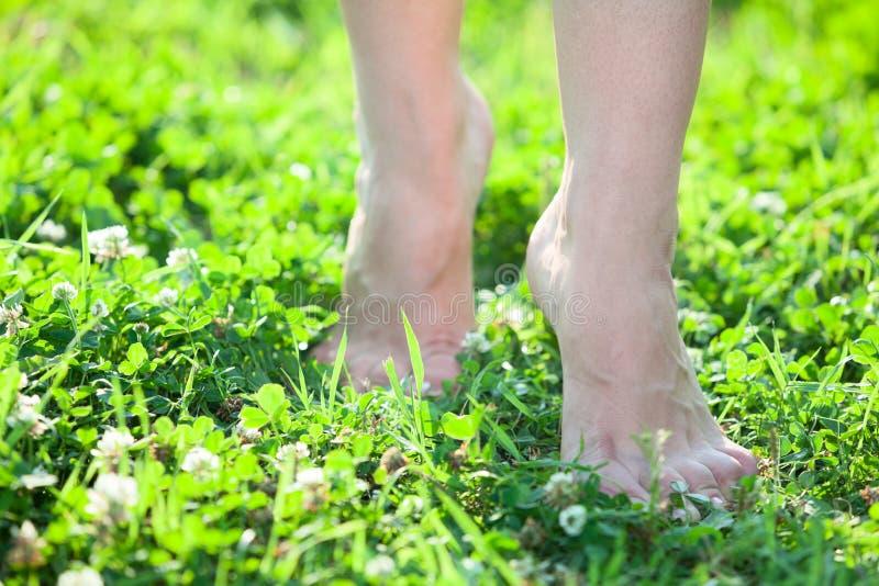 Передний взгляд конца-вверх женских ног шагая на зеленую траву стоковое фото