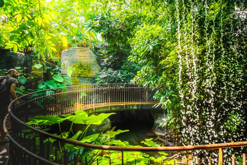 Перила глубокого исследователя человека авантюриста водопада прогулки джунглей искусственные стоковые изображения rf
