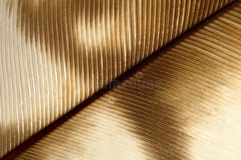 перо детали стоковая фотография rf